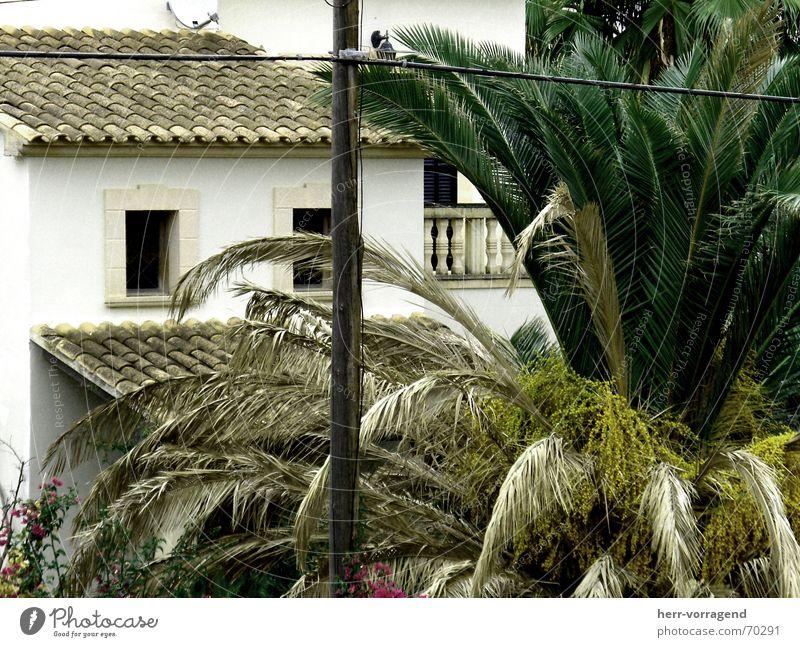 Halbiert Pflanze Haus Fenster Elektrizität trist Sträucher Balkon Spanien Strommast Leitung Mallorca