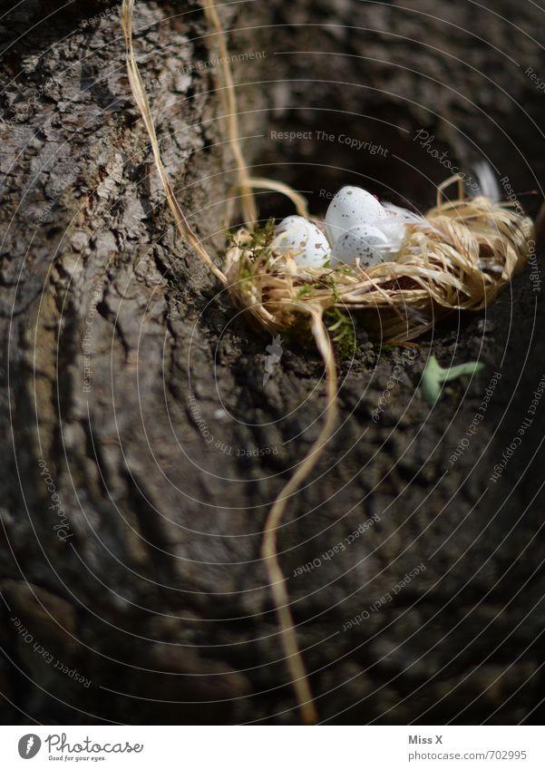 ein Lichblick / neues Leben Sommer Baum Tier Tierjunges Frühling klein Vogel Beginn Warmherzigkeit Schutz Ostern Baumstamm Ei Geborgenheit Geburt