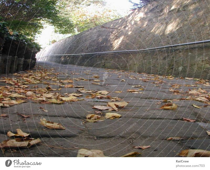 Weg im Herbst Wege & Pfade Kopfsteinpflaster
