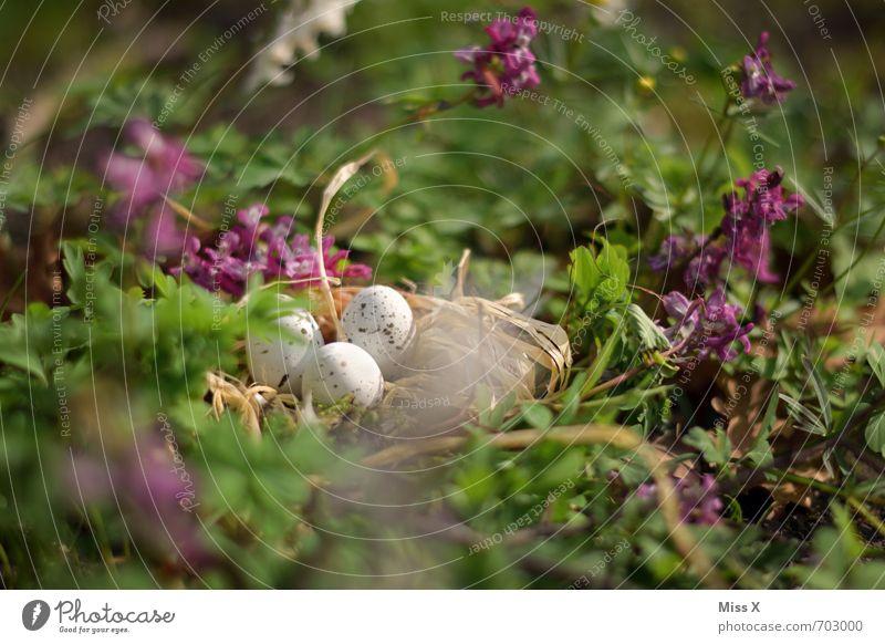 im Schatten Ostern Natur Frühling Blume Gras Blatt Blüte Vogel Tierjunges klein Stimmung Schutz Geborgenheit Warmherzigkeit Osternest Nest Vogeleier Osterküken