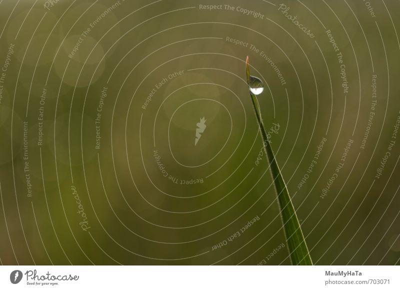 Tautropfen im Gras Natur Pflanze Urelemente Luft Wasser Wassertropfen Horizont Sonne Sonnenaufgang Sonnenuntergang Frühling Klima Schönes Wetter Regen Moos