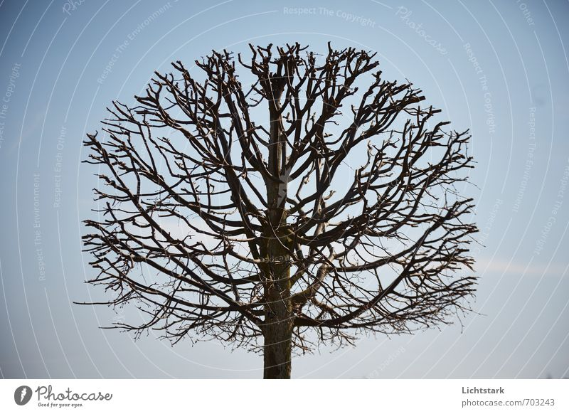 vom leben und sterben Himmel Natur blau Baum Umwelt Frühling braun Park Wolkenloser Himmel