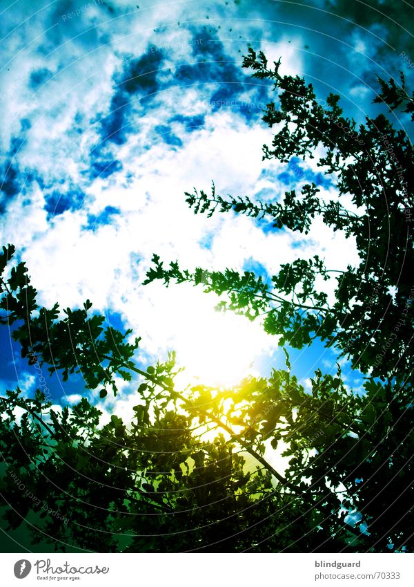 The New Beginning grün blau Blatt Wolken gelb dunkel Regen gefährlich Ast Rauch türkis Ekel Gift Filter ungesund