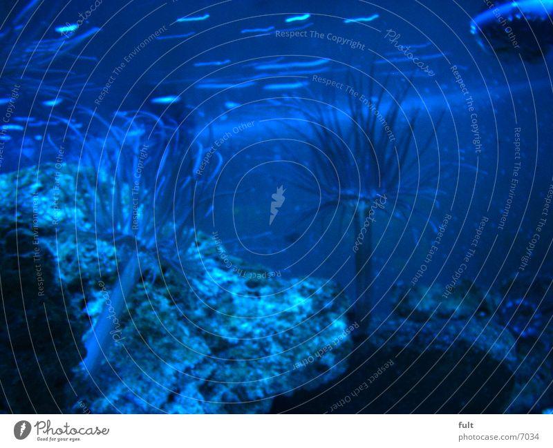 Aquarium Wasserpflanze Häusliches Leben blaues Wasser Blauer effekt