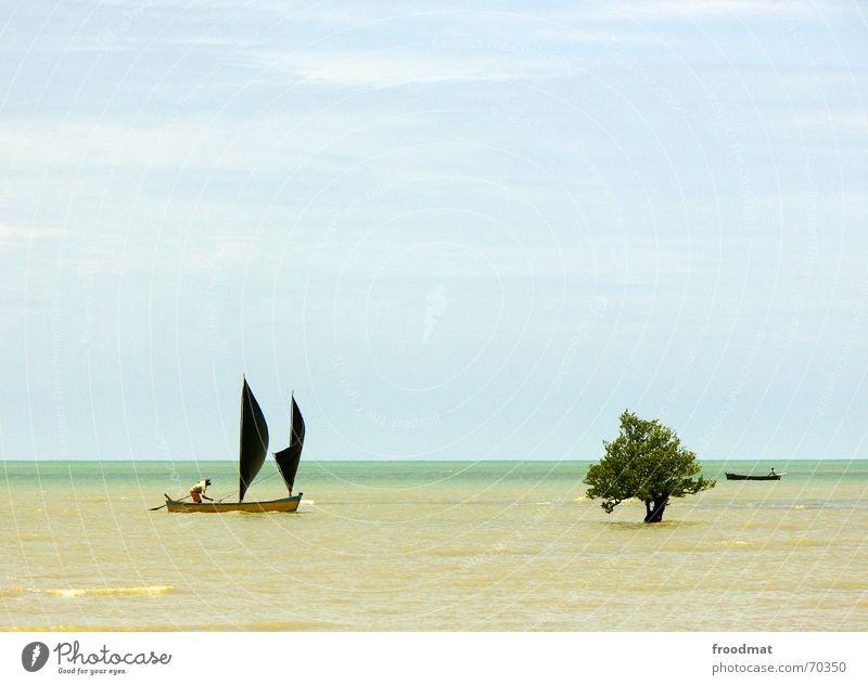 Segelboot Baum Meer Wasserfahrzeug Fischer Brasilien Strand Sommer sehr wenige Segeln Himmel Flut