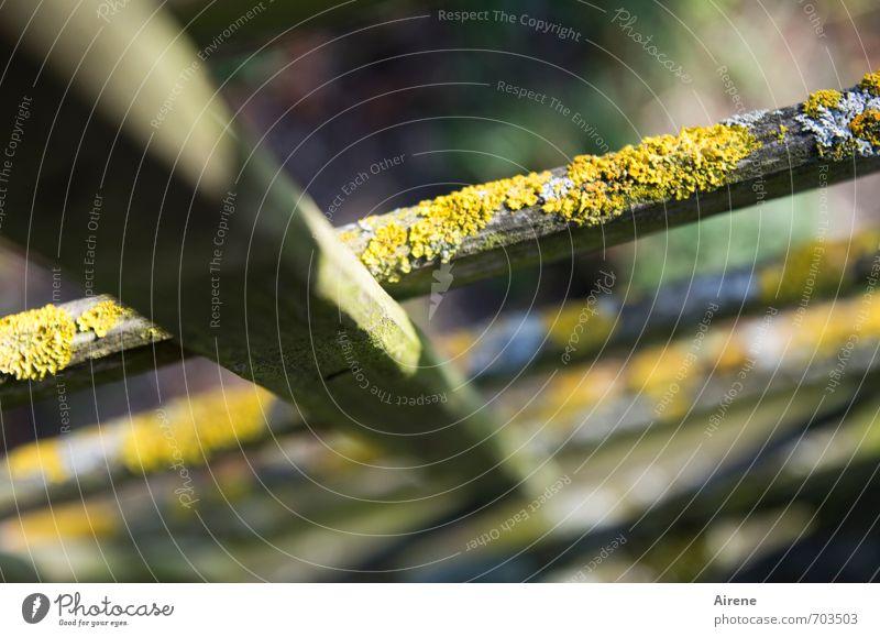 unverwechselbar alt grün Pflanze Senior Holz natürlich braun Garten gold ästhetisch Moos verwittert bewachsen Gerüst Naturwuchs