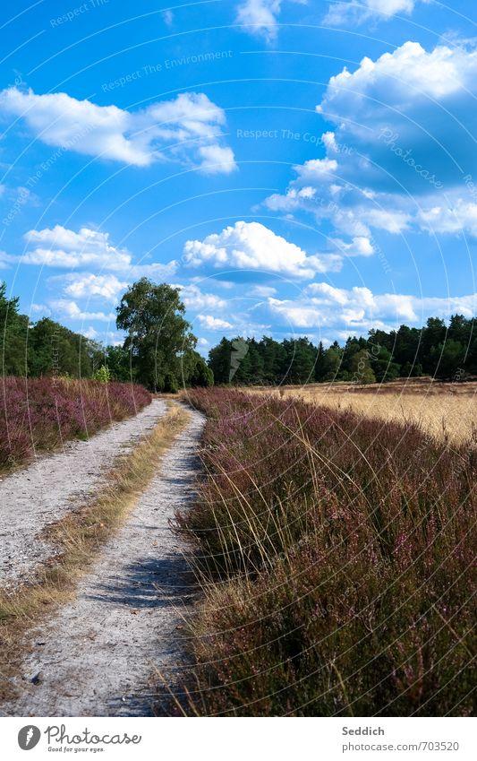 Lüneburger Heide - Büsenbachtal Natur Ferien & Urlaub & Reisen Sommer Erholung Landschaft Umwelt Wege & Pfade Erde Zufriedenheit Sträucher wandern Lebensfreude Fahrradfahren violett Fußgänger Heide