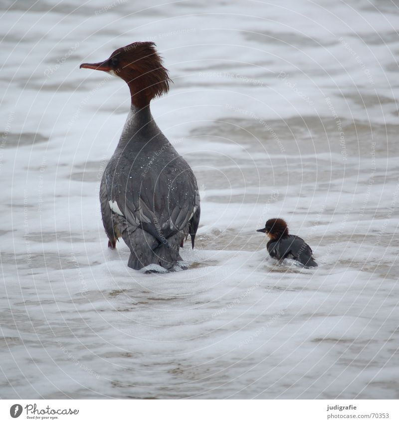 Mutter und Kind 2 Wasser Meer Strand Tier Leben Haare & Frisuren Sand See braun Vogel Angst gefährlich bedrohlich Feder Schutz Sturm