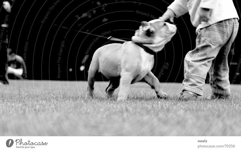 hey du Hund klein Kind Streicheln dog boy Junge small Freundschaft Bulldogge