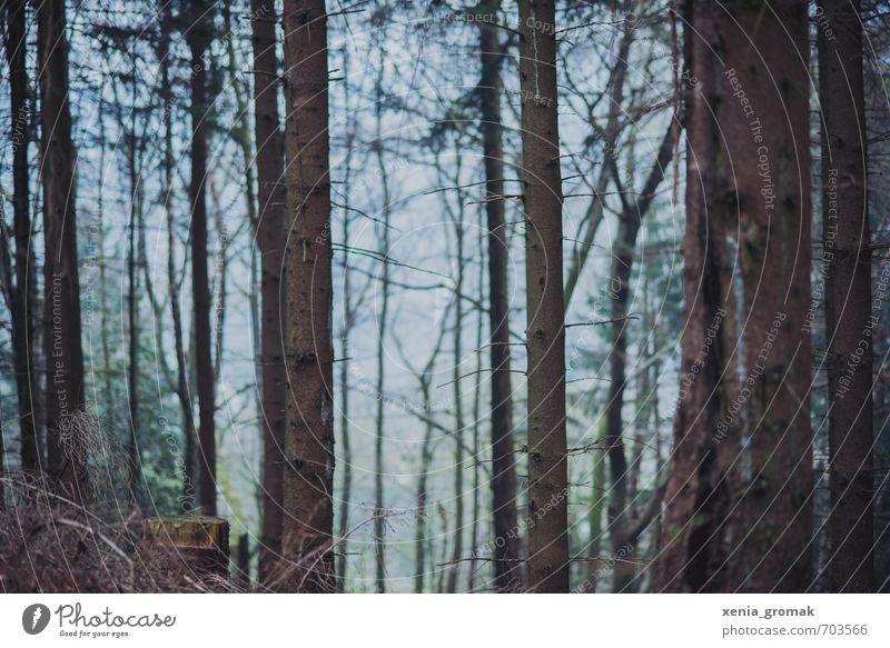 Wald Freizeit & Hobby Ferien & Urlaub & Reisen Tourismus Ausflug Abenteuer Ferne Berge u. Gebirge wandern Umwelt Natur Landschaft Pflanze Himmel Horizont