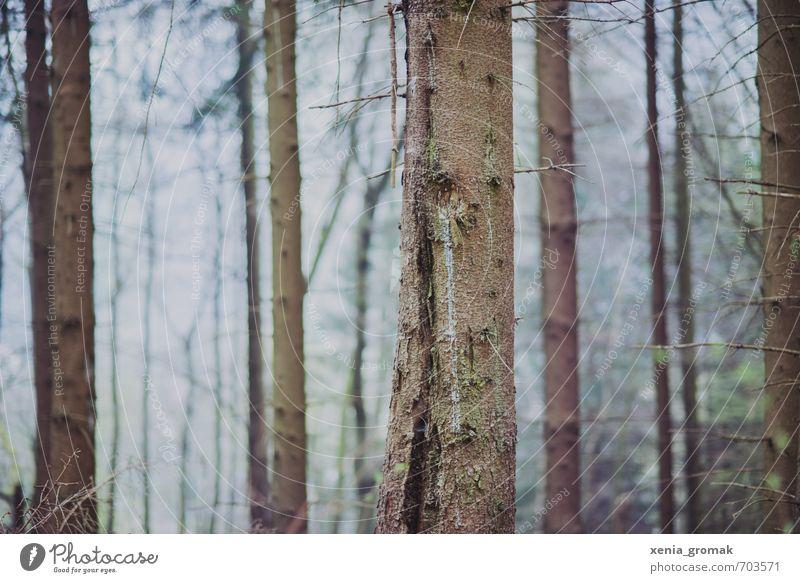 Bäume ruhig Ferien & Urlaub & Reisen Tourismus Ausflug Abenteuer wandern Umwelt Natur Pflanze Frühling Sommer Klima Wetter Schönes Wetter schlechtes Wetter Baum