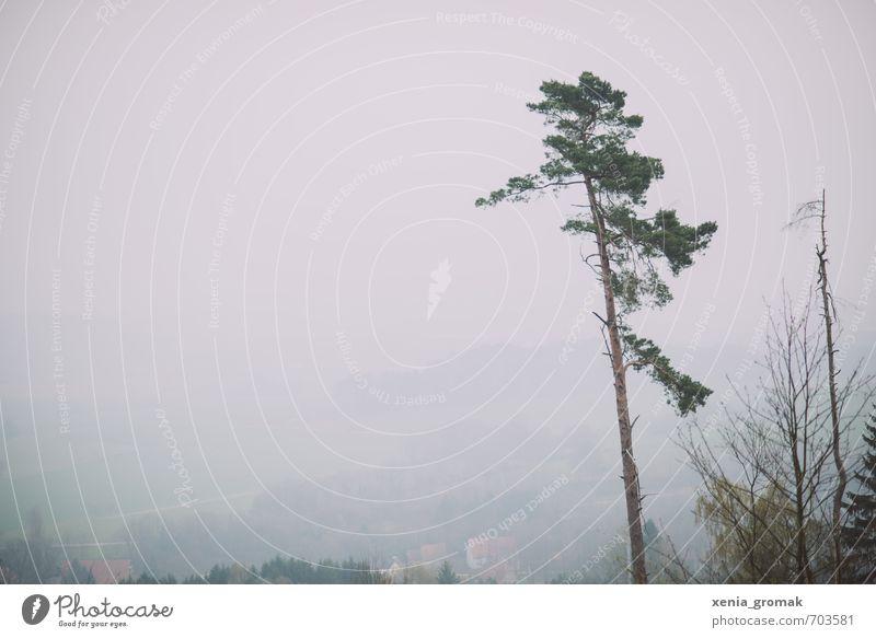 Wald Umwelt Natur Landschaft Pflanze Himmel Wolkenloser Himmel Horizont Frühling Sommer Herbst Winter Klima Klimawandel Wetter Schönes Wetter schlechtes Wetter