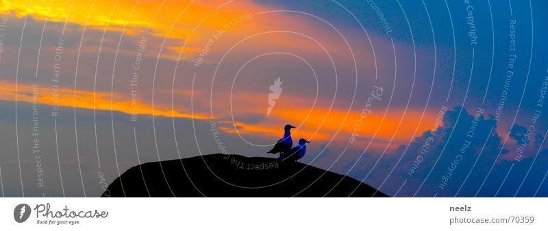 zu zweit Himmel Meer blau Tier Zusammensein orange Felsen Beginn Körperhaltung Ziel Kitsch vorwärts Abenddämmerung Standort Startposition