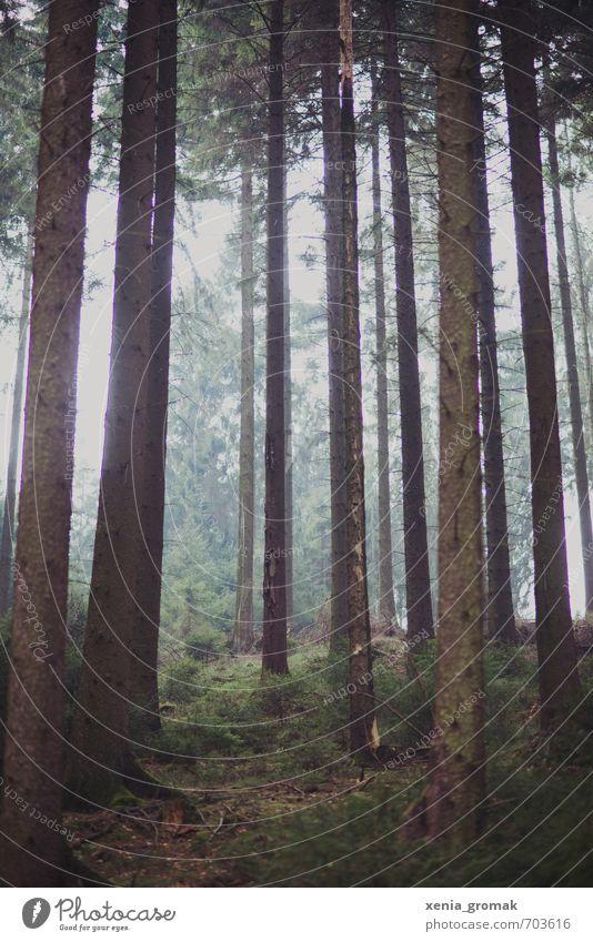 Tannen Natur Ferien & Urlaub & Reisen Pflanze Sommer Baum Landschaft ruhig Wald Umwelt Herbst Frühling Park Wetter Freizeit & Hobby Tourismus wandern