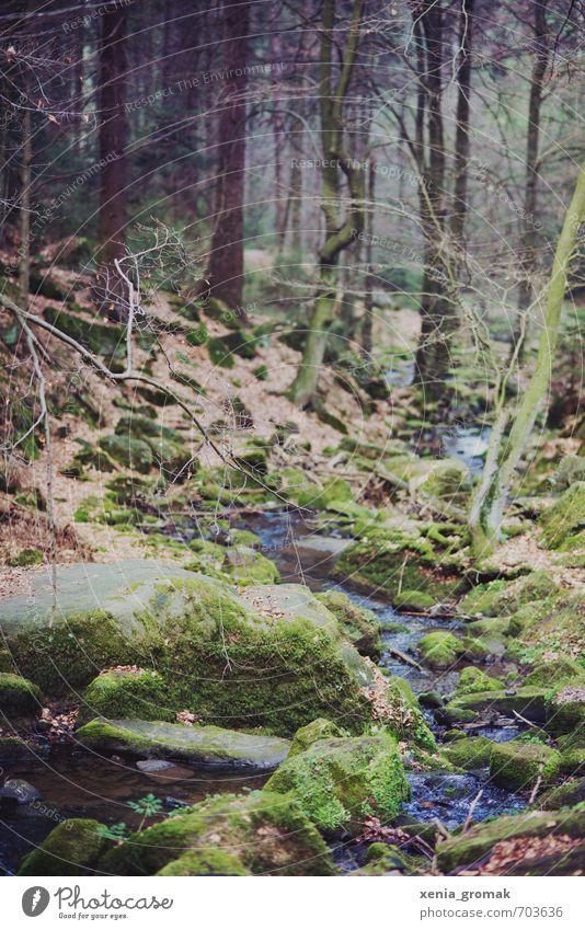 Wald Umwelt Natur Landschaft Pflanze Urelemente Erde Wasser Frühling Sommer Herbst Klima Baum Gras Sträucher Moos Grünpflanze Nutzpflanze Wildpflanze Garten