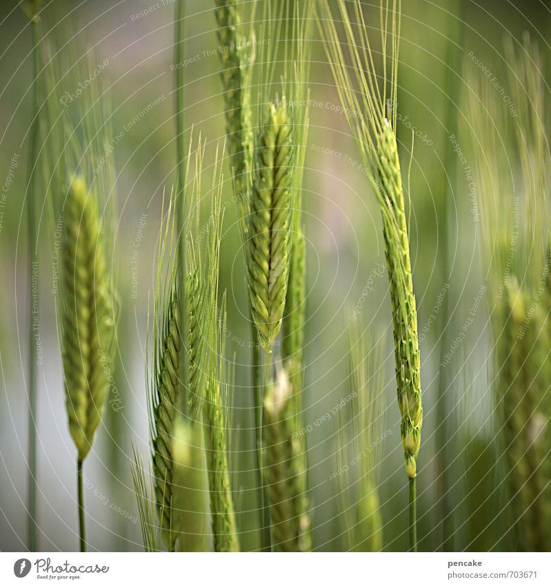 ährengarde Ernährung Bioprodukte Vegetarische Ernährung Natur Urelemente Frühling Sommer Nutzpflanze Feld ästhetisch Erfolg frisch Gesundheit nachhaltig