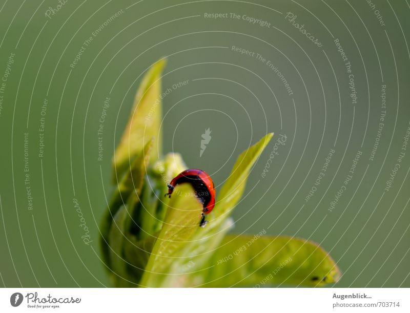 bin dann mal weg... grün rot ruhig Tier Zeit Zufriedenheit verrückt Gelassenheit Stress Marienkäfer Unlust