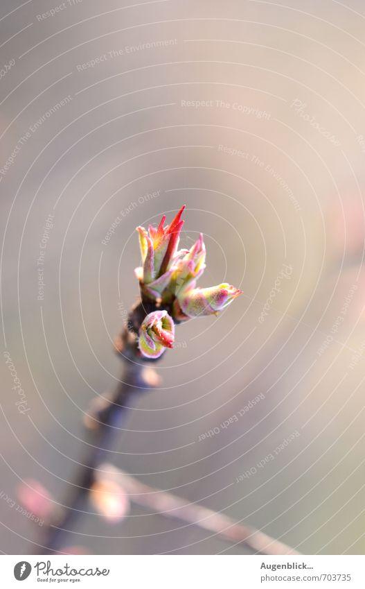 ...im Sonnenlicht aufgewachsen... Natur Frühling Sträucher Warmherzigkeit Lebensfreude Hoffnung Geborgenheit Frühlingsgefühle