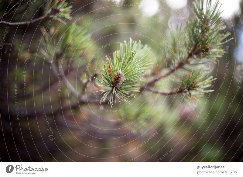 Latschen Umwelt Natur Frühling Sommer Herbst Baum Grünpflanze Latschenkiefer Wald natürlich schön grün Freizeit & Hobby Gesundheit Klima Umweltschutz Farbfoto