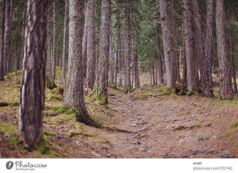 Märchenwald Natur grün Sommer Baum Erholung Landschaft ruhig dunkel Wald Umwelt Herbst Frühling Freiheit gehen braun Erde