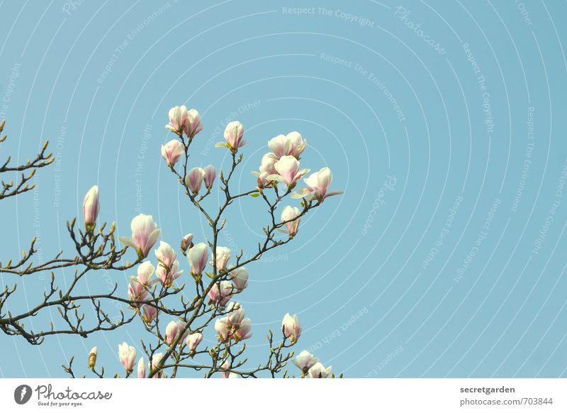 blumige ostern euch! Umwelt Natur Wolkenloser Himmel Frühling Pflanze Baum Sträucher Duft frisch Wärme blau weiß ästhetisch Vergänglichkeit Wandel & Veränderung