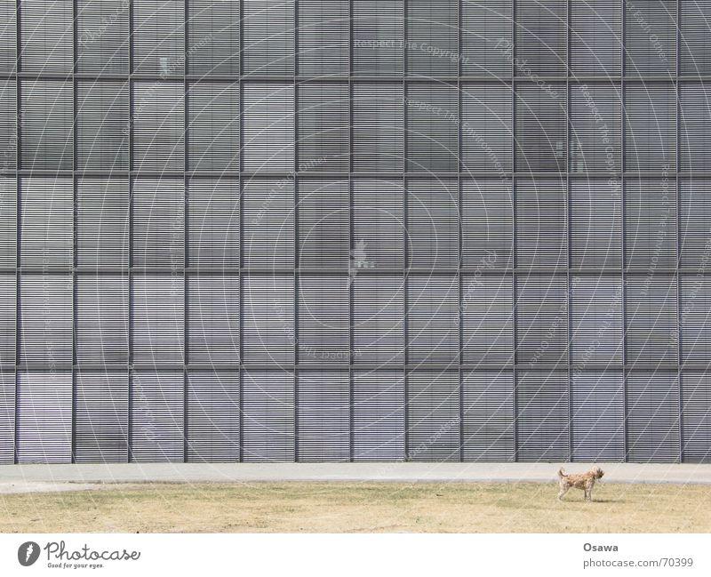 Sonnenschutz 02 Haus Gebäude Fassade Fenster Raster Regierungssitz Hund Wetterschutz Strukturen & Formen Architektur