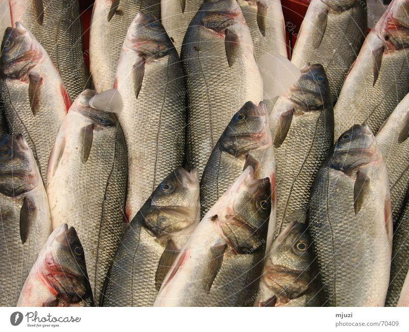 fisch Fliege frisch Fisch Markt Scheune Angelrute aufgereiht Fischmarkt Süßwasser gekühlt Spezialitäten