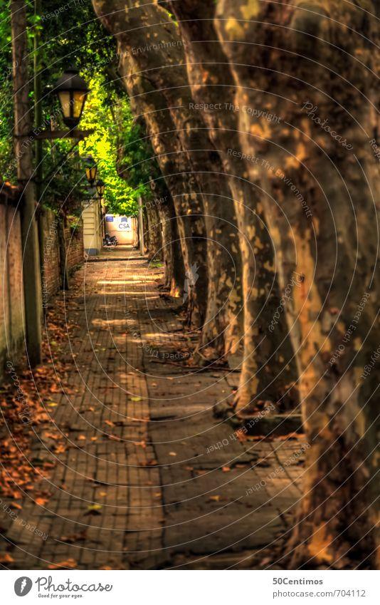 Gehweg unter Bäumen - Ale Ferien & Urlaub & Reisen Tourismus Ausflug Ferne Sommer Sommerurlaub Pflanze Baum Uruguay Kleinstadt Altstadt Fußgänger Wege & Pfade