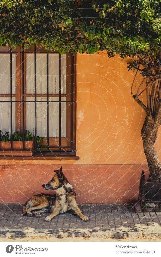 Im Süden - Der Wachhund der Strasse Lifestyle Ferien & Urlaub & Reisen Tourismus Ferne Freiheit Städtereise Sommer Sommerurlaub Häusliches Leben Wohnung Haus
