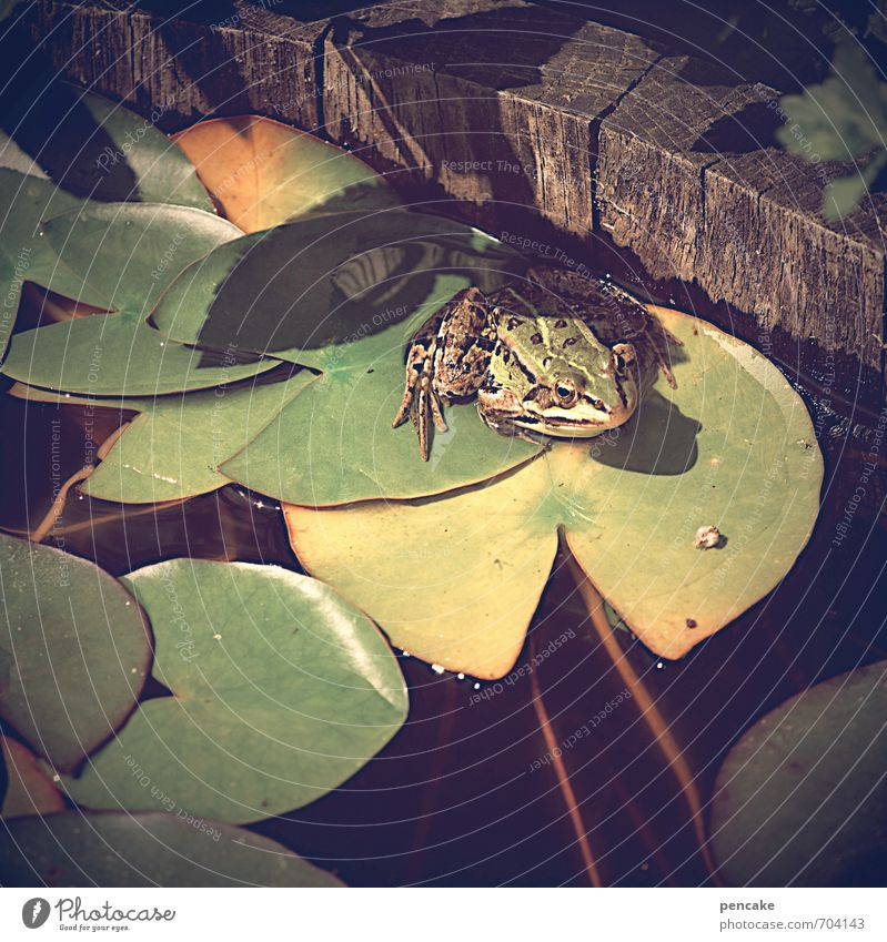es war einmal... Natur Urelemente Wasser Sommer Schönes Wetter Blatt Garten Teich Tier Frosch 1 Zeichen Freundlichkeit Glück schön kalt klein nass natürlich