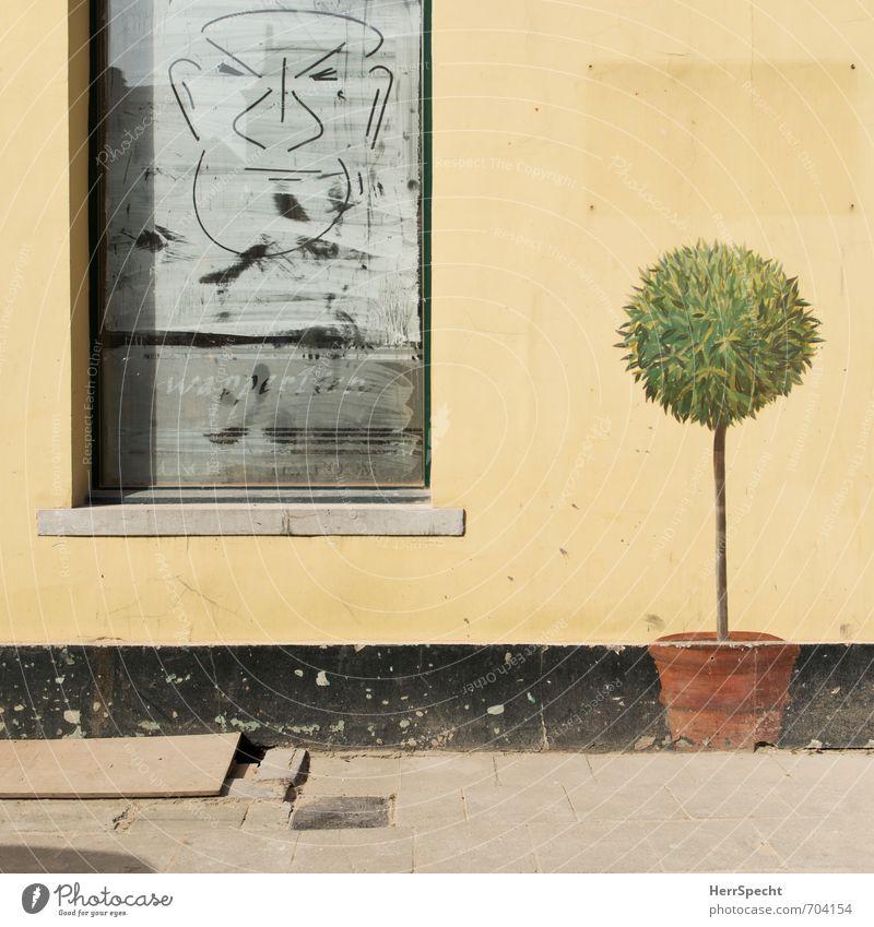 Kunst macht die Welt schön alt Stadt grün Baum Haus gelb Fenster Gesicht Wand Graffiti Mauer grau Stein außergewöhnlich Kunst Fassade