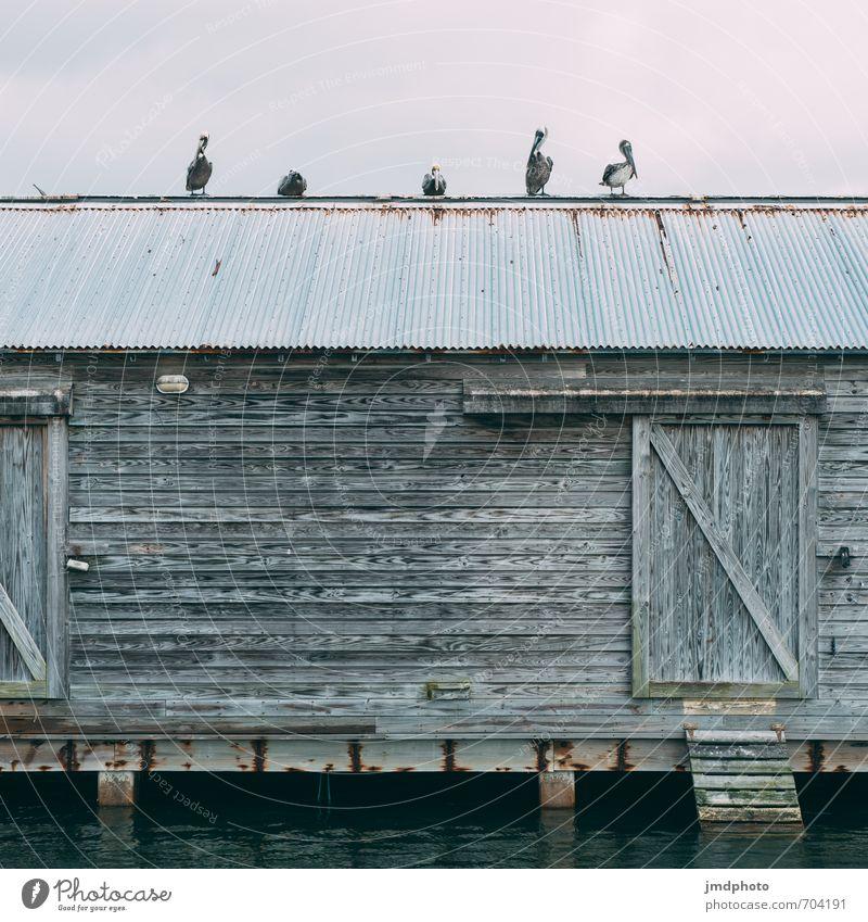 5 Pelikane Natur Ferien & Urlaub & Reisen Wasser Sommer Wolken Haus Tier Ferne Umwelt Wand Mauer Freiheit Vogel Fassade Tür Wildtier