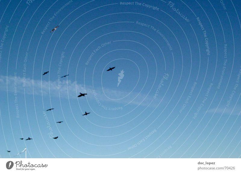 in die Weite Himmel weiß Meer blau Wolken Freiheit Vogel fliegen Sehnsucht Strommast Möwe Schwarm Dohle