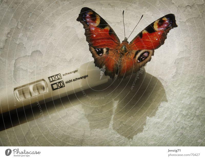 Strike! schwanger Treffer Testergebnis Schmetterling Insekt schwangerschaftstest Versuch Augenfalter Vor hellem Hintergrund Schatten Ganzkörperaufnahme