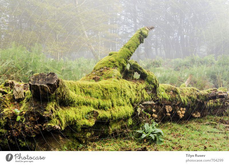 Natur schön grün Farbe Sonne Baum Wald Berge u. Gebirge Straße Wege & Pfade natürlich braun Europa Platz Spanien Fußweg