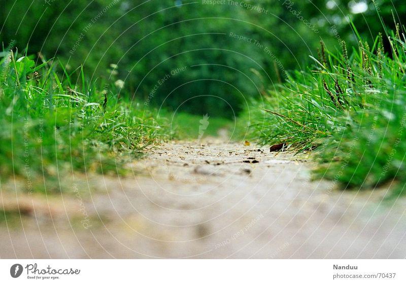 Der Weg ist das Ziel Natur schön grün ruhig Ferne Wiese Gefühle Gras Wege & Pfade klein wandern gehen nass groß Beginn Ende