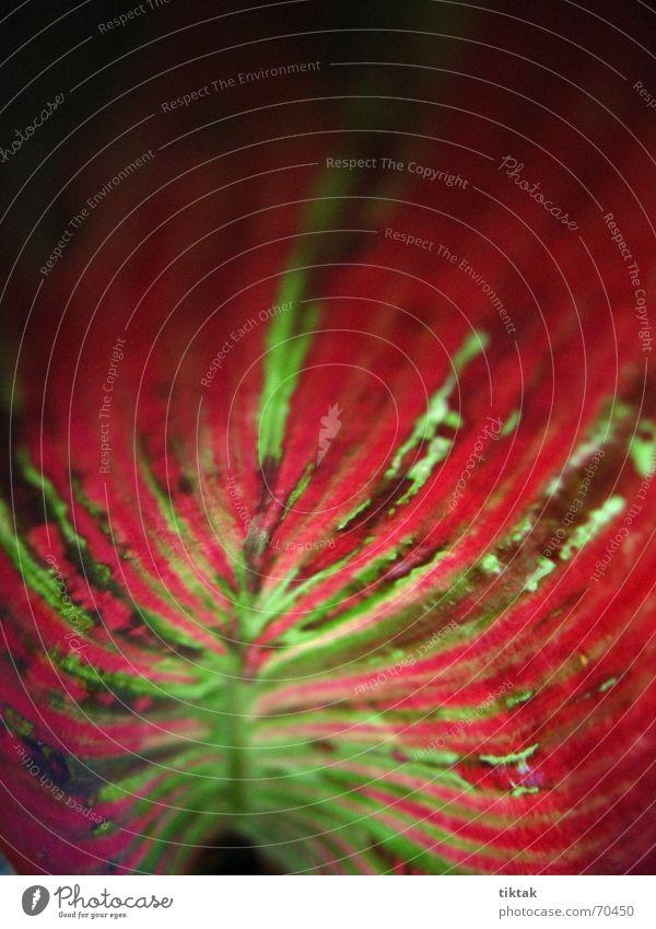 wie gemalt Natur grün rot Pflanze Farbe Blatt Gefühle Kunst Linie Beleuchtung Hintergrundbild Wachstum Streifen streichen Urwald Blut