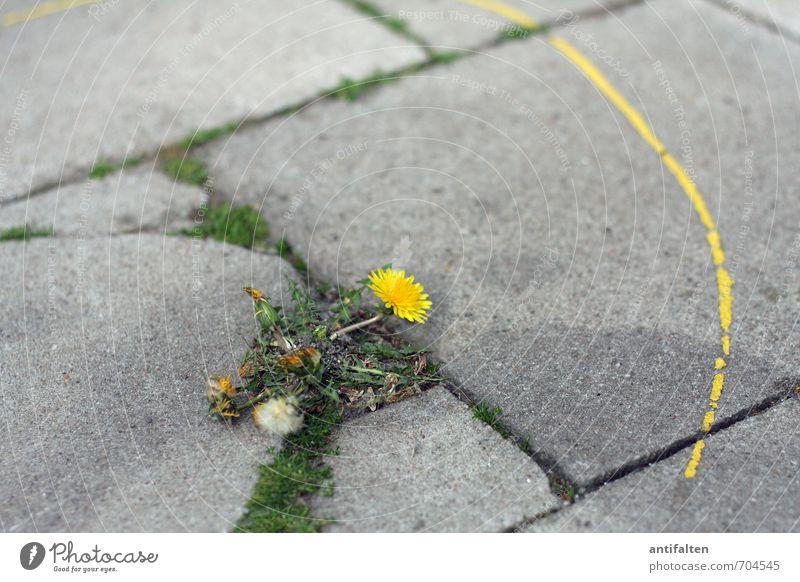 Farbenspiel Natur Stadt grün Sommer Blume Blatt gelb Umwelt Farbstoff Frühling Blüte grau natürlich Schilder & Markierungen leuchten Platz