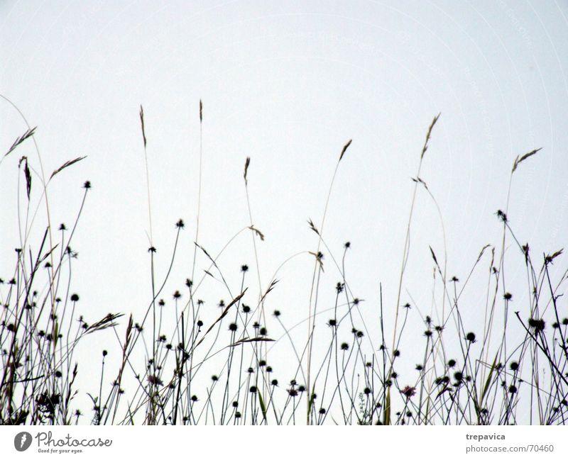 sehr... Blume Feld Wiese Blüte Wiesenblume Gras Sommer Zärtlichkeiten berühren Pflanze schön Brise Gefühle Natur Silhouette