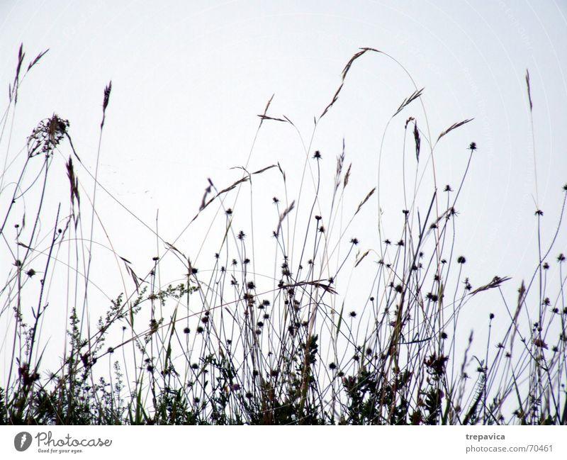 ... sehr... Blume Feld Wiese Blüte Wiesenblume Gras Sommer Zärtlichkeiten berühren Pflanze schön Brise Gefühle Natur Silhouette