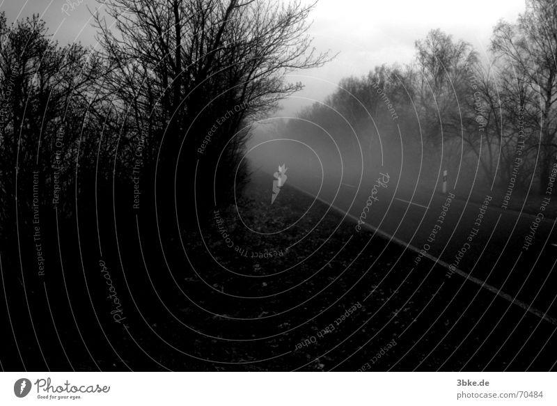 gefährliche fahrt weiß Baum schwarz Straße dunkel Nebel Beton gefährlich Sträucher Asphalt Sturm Autobahn Vorsicht Leitplanke