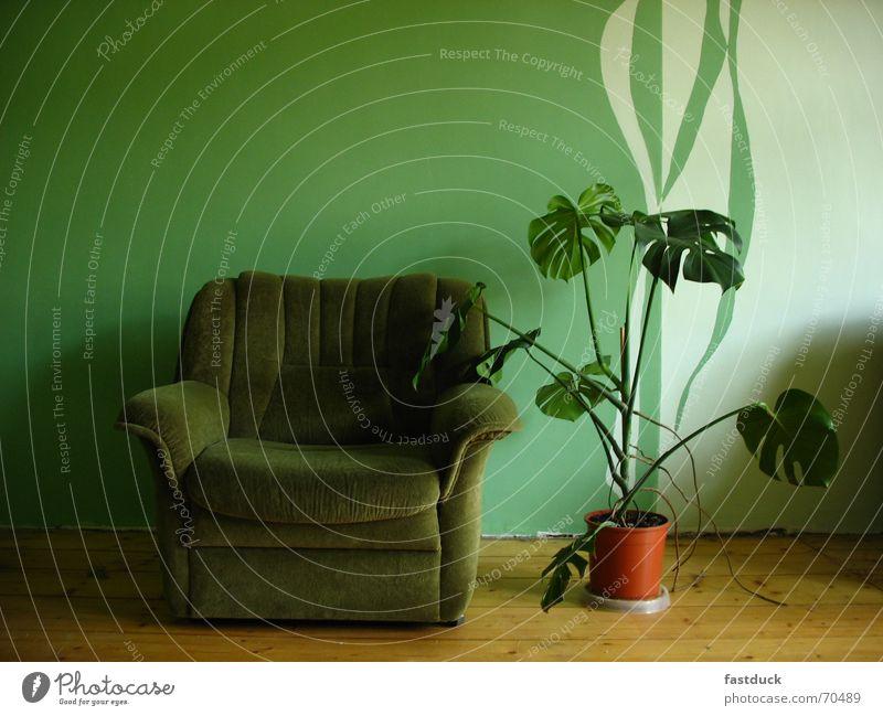 looking for green? grün Pflanze Wand leer Stuhl Stoff Parkett Blumentopf