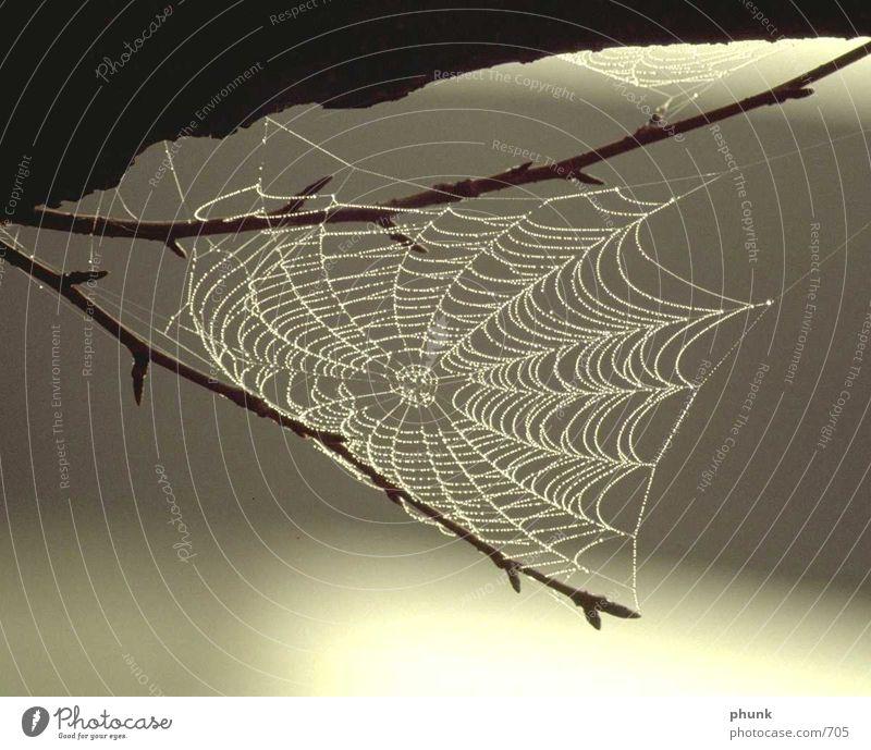 Spinnennetz komplett Wasser Regen Verkehr gefährlich Netz Konzentration Tau Vorsicht Unschärfe perfekt