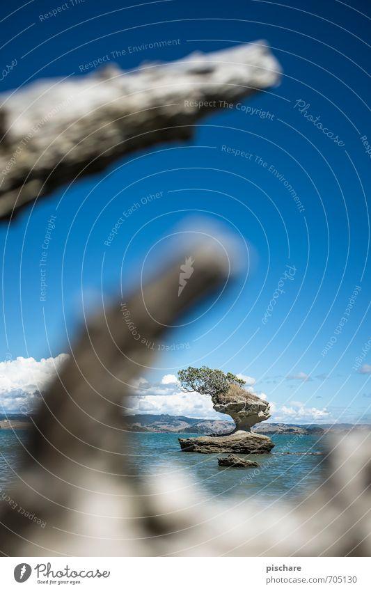 Bauminsel Natur Meer Landschaft Strand Küste Felsen Insel Bucht exotisch Neuseeland
