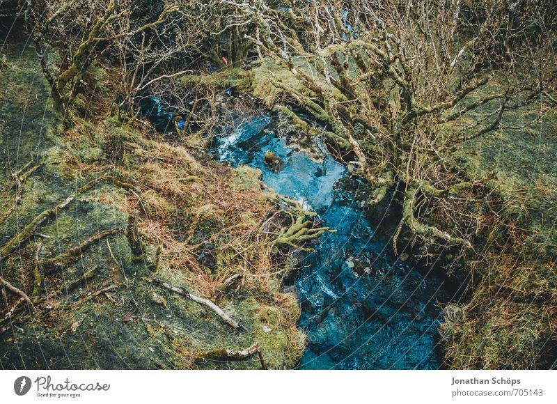 Isle of Skye IV Natur blau grün Wasser Pflanze Landschaft Winter Wald Umwelt Idylle wild Sträucher ästhetisch Abenteuer Urwald bizarr