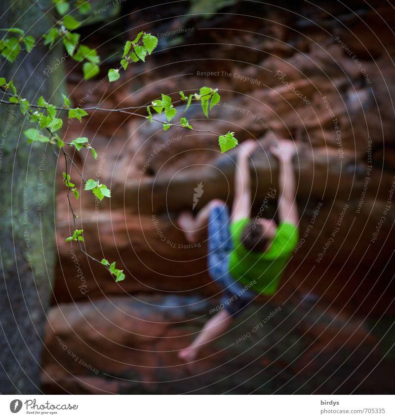 Der Weg ist das Ziel Klettern Bergsteigen boldern Freeclimbing Freeclimber Junger Mann Jugendliche Körper 1 Mensch 18-30 Jahre Erwachsene Baum Blatt Ast Felsen