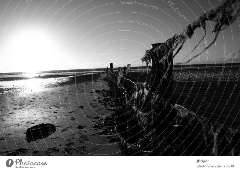 Eine Brise Tang und Freiheit Strand Meer Sonnenuntergang Zaun Pfosten Ebbe Algen Fußspur Einsamkeit ruhig Draht Außenaufnahme Schwarzweißfoto Nordsee Ferne Wind