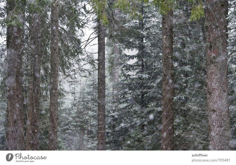 Alles muss raus! Umwelt Natur Landschaft Winter schlechtes Wetter Nebel Eis Frost Schnee Schneefall Pflanze Baum Wald kalt Schneelandschaft Schneeflocke