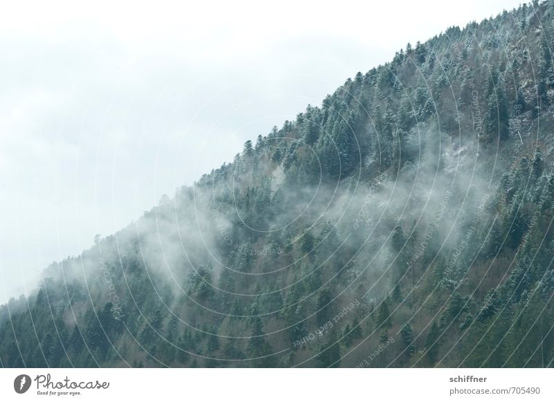 Schwarzwald, gepudert Natur Landschaft Winter Klima Klimawandel Wetter schlechtes Wetter Nebel Eis Frost Schnee Schneefall Pflanze Baum Wald Berge u. Gebirge