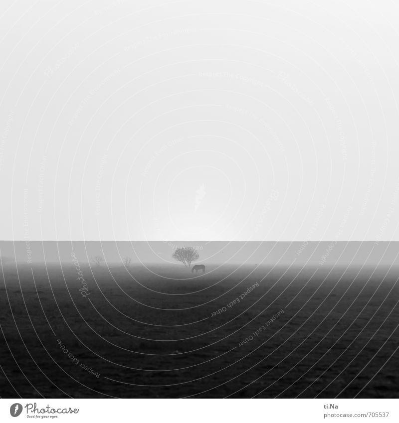 echt | Lonesome Horse Frühling Nebel Küste Nordsee Dithmarschen Deich Pferd Bewegung Fressen wandern Ferne Stadt wild grau schwarz silber weiß ruhig Fernweh